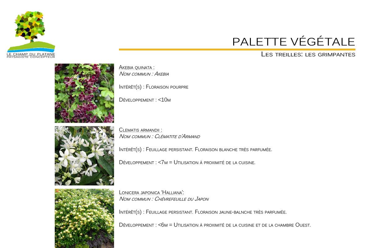 10 apd palette vegetale jardin le champ du platane. Black Bedroom Furniture Sets. Home Design Ideas